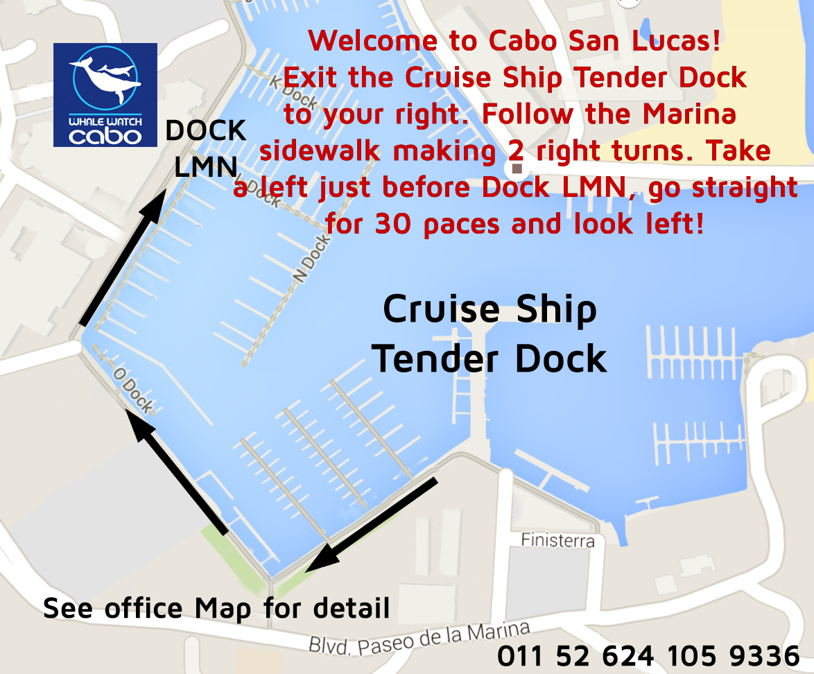 cabo san lucas whale watching tour map