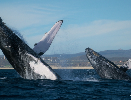 The Best Place To See Whales