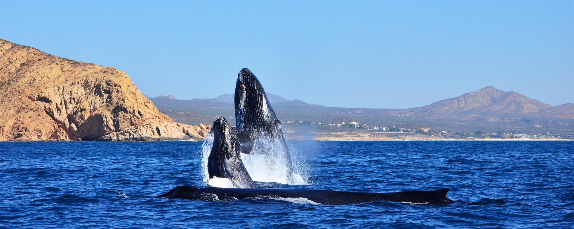 Whale Watch Cabo Tours and Rates