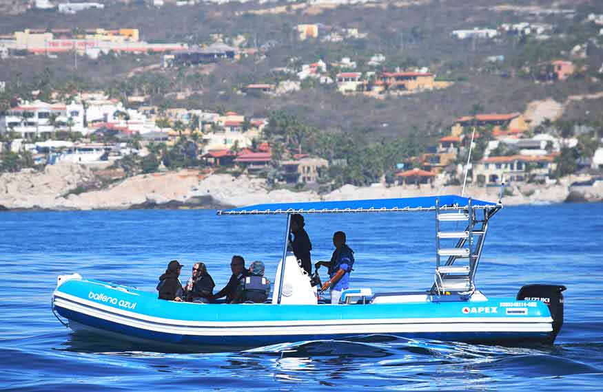 Inflatable Boat Whale Watching Cabo San Lucas