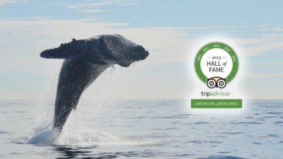 Best Whale Watch Tour Cabo San Lucas