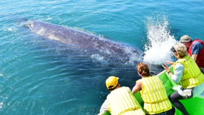 Gray Whale Nursery Tour cabo