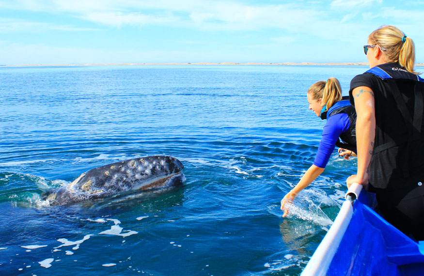 Gray Whale Nursery Tour