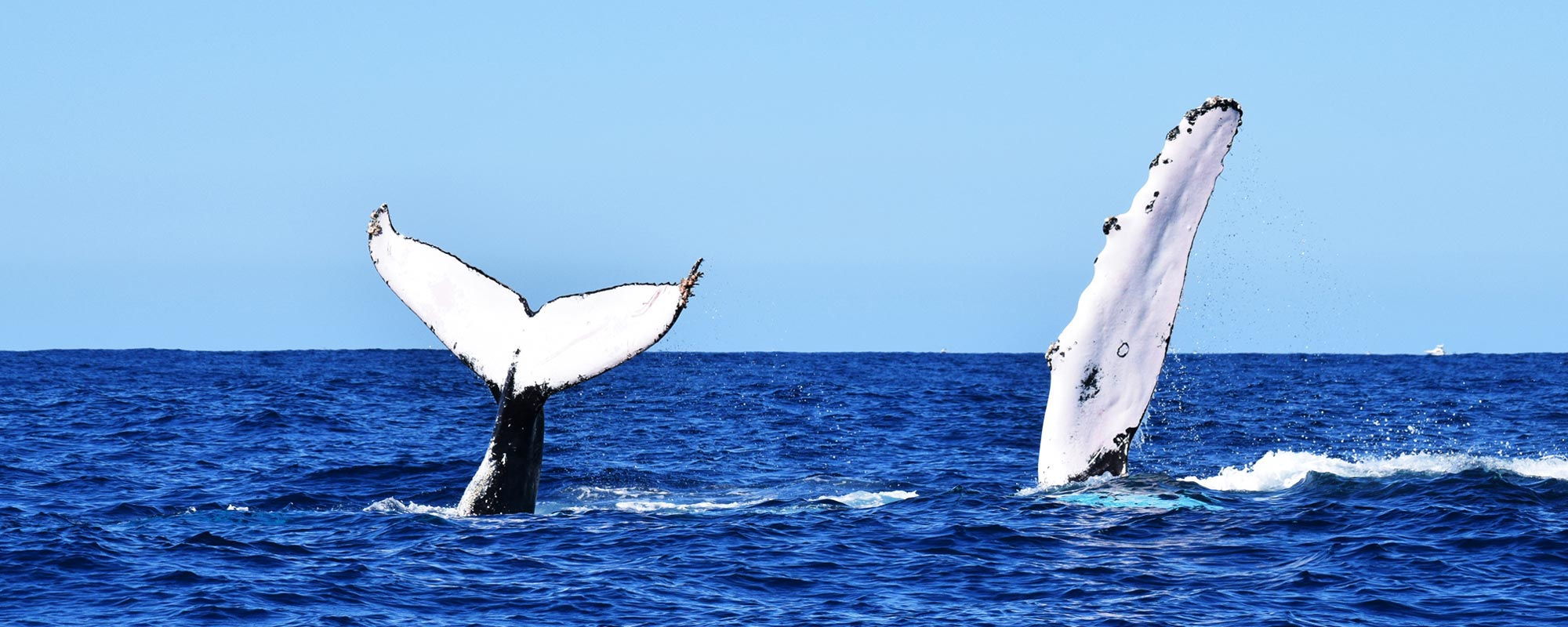 Los Cabo Whale Watching Tour Rates