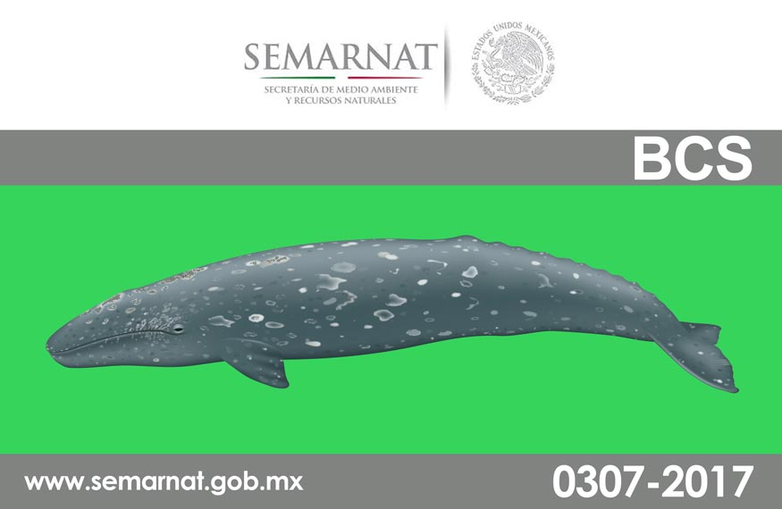 Mexico Whale Watching Regulations