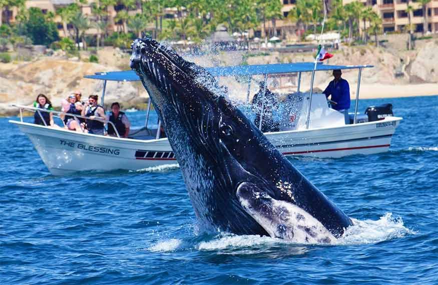 Cabo San Lucas Group Whale Watching Tour