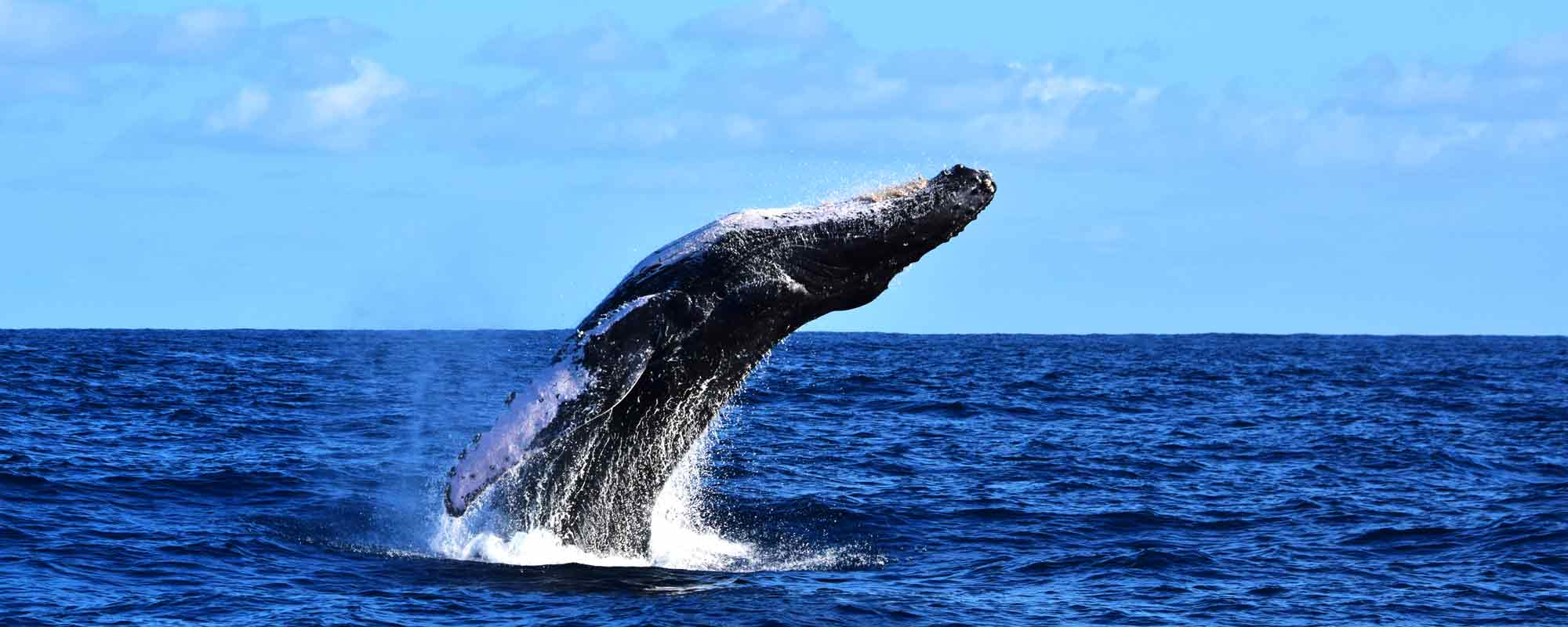 6370d552363 Cabo San Lucas Group Whale Watching Tours - Whale Watch Cabo Tours