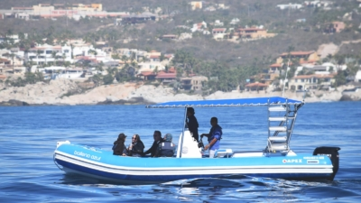Inflatable Boat Whale Watching Los Cabos
